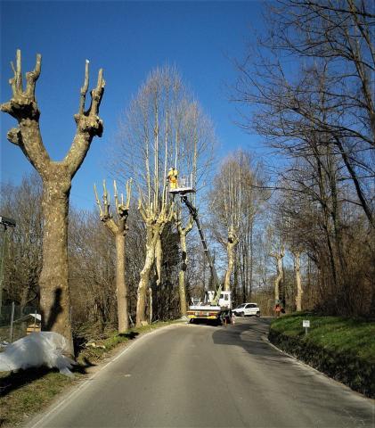 un intervento di potatura alberi (foto archivio)