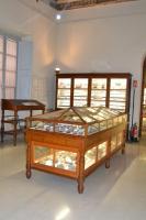 Sala B - Paleontologia