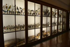 Sala D - Ornitologia, Ittiologia, Erpetologia e Osteologia