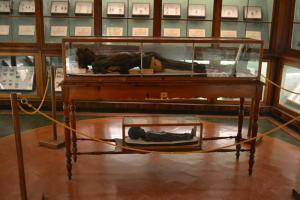 Sala E - Entomologia e reperti egizi
